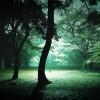 onelight_003